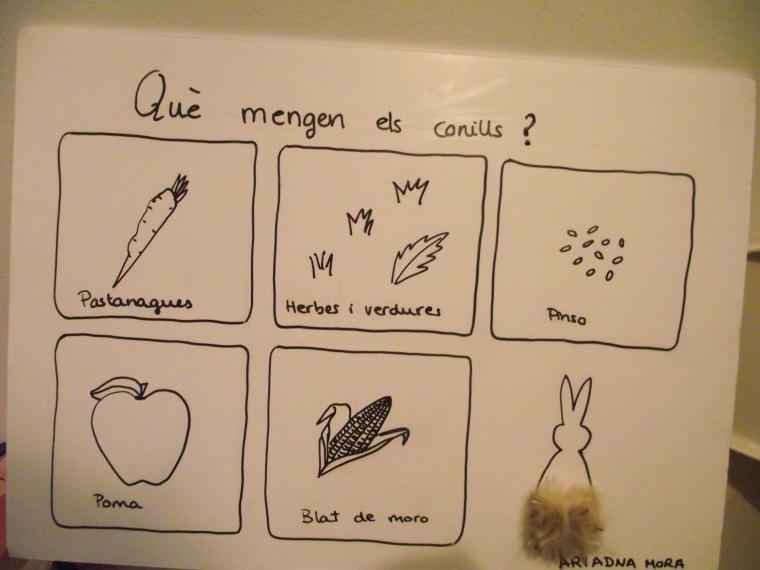 Proyecto de fín de curso (P3): ¿Qué comen los conejos?